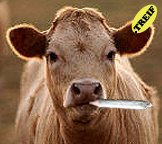 cow-smoking-pot-706747.jpg