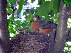 Robin's Nest Photo by Rabbi Jason Miller www.jasonamiller.com